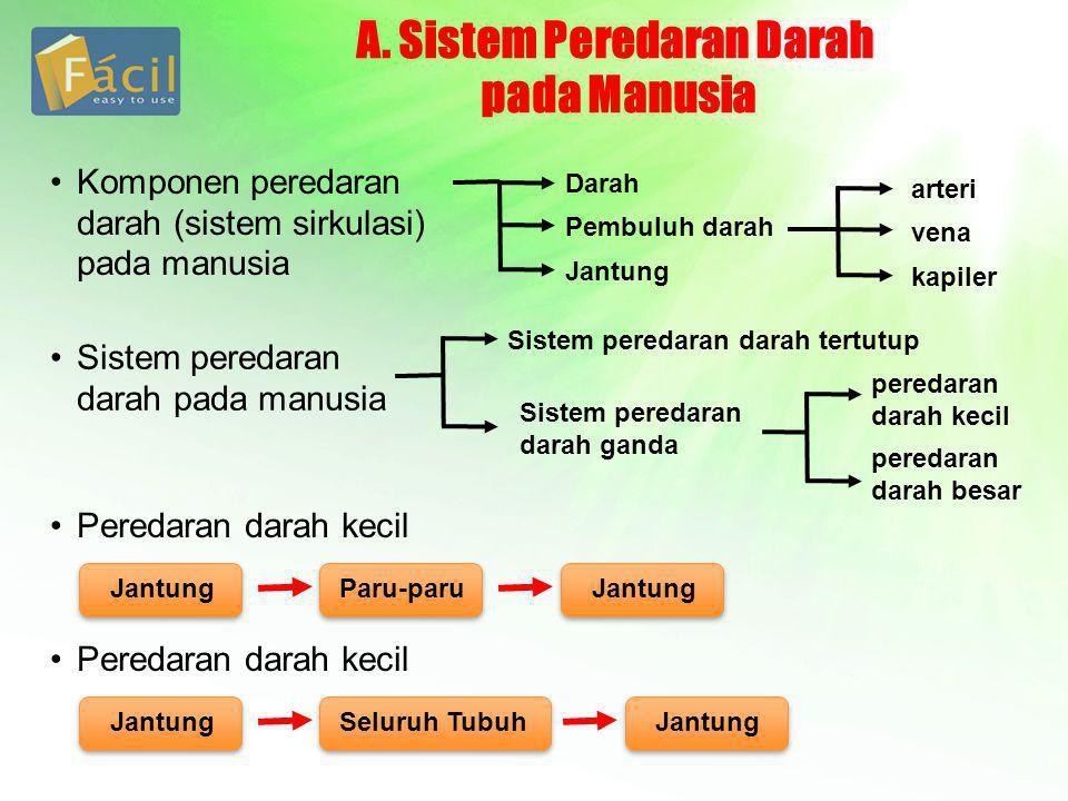 A. Sistem Peredaran Darah pada Manusia Komponen peredaran darah (sistem sirkulasi) pada manusia Darah Pembuluh darah Jantung arteri vena kapiler Siste