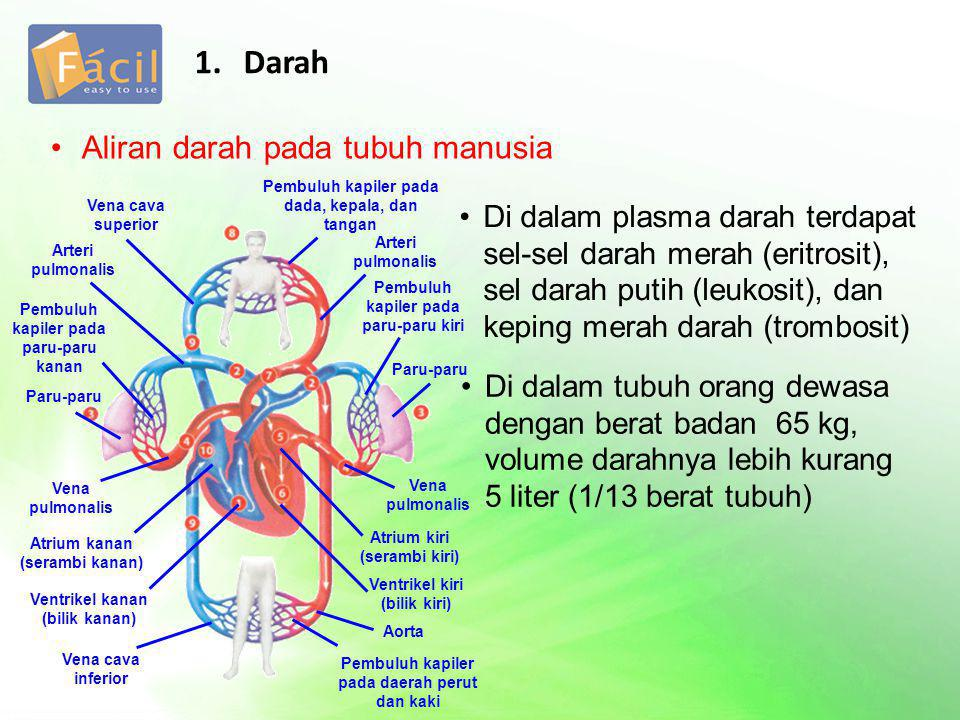 Aliran darah pada tubuh manusia 1. Darah Di dalam plasma darah terdapat sel-sel darah merah (eritrosit), sel darah putih (leukosit), dan keping merah