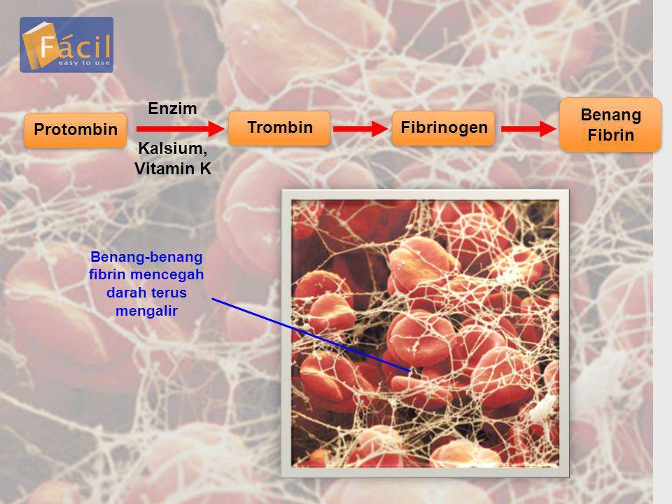 Protombin Trombin Enzim Kalsium, Vitamin K Fibrinogen Benang Fibrin Benang-benang fibrin mencegah darah terus mengalir