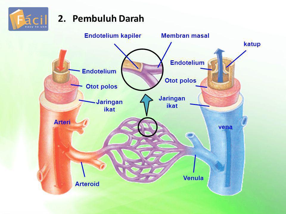 a.Pembuluh Nadi (Arteri) Berdasarkan ukuran Aorta Arteri Arteriol Berdasarkan macam Pembuluh nadi tubuh Pembuluh nad paru-paru (arteri pulmonalis) terbagi menjadi b.Pembuluh Balik (Vena) Terdiri atas Pembuluh balik bagian atas (Vena cava superior) Pembuluh balik bagian bawah (Vena cava inferior) Pembuluh balik paru-parus (Vena pulmonalis) c.Pembuluh Kapiler Tempat terjadinya pertukaran zat antara darah dan jaringan