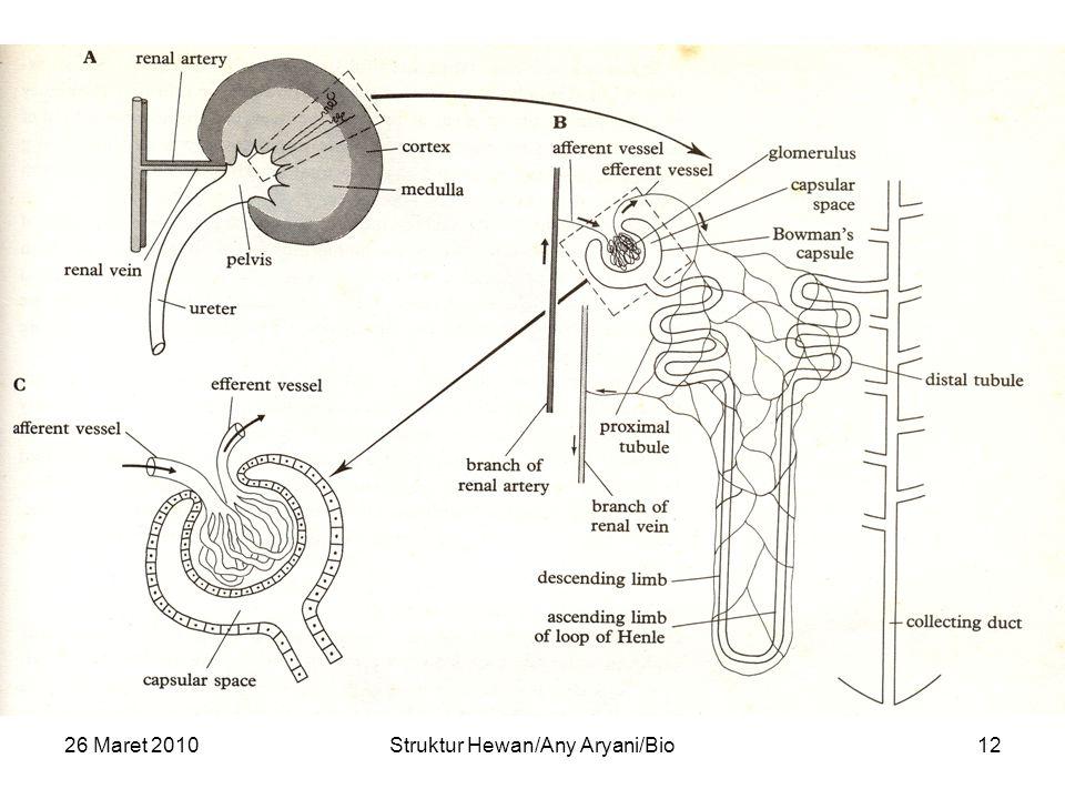 26 Maret 2010Struktur Hewan/Any Aryani/Bio12