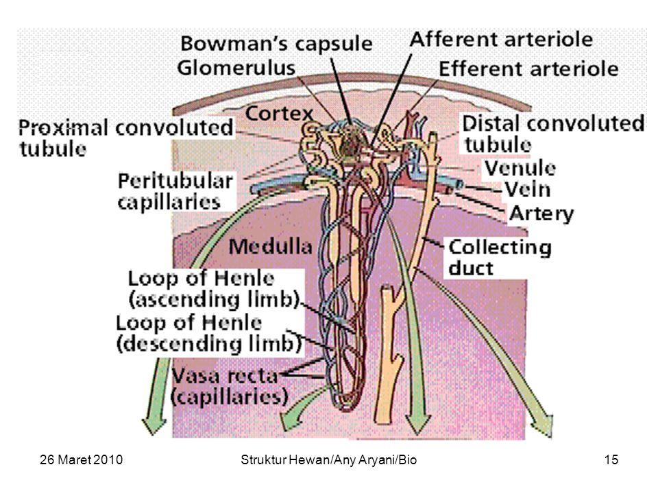 26 Maret 2010Struktur Hewan/Any Aryani/Bio15