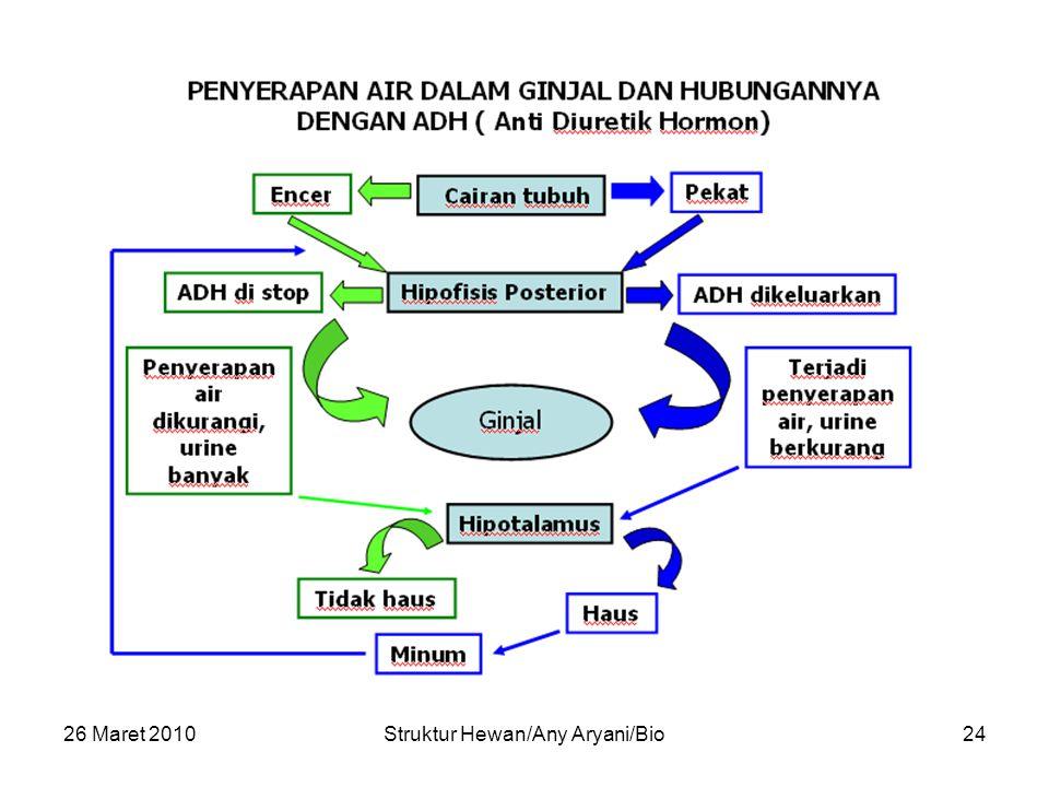 26 Maret 2010Struktur Hewan/Any Aryani/Bio24