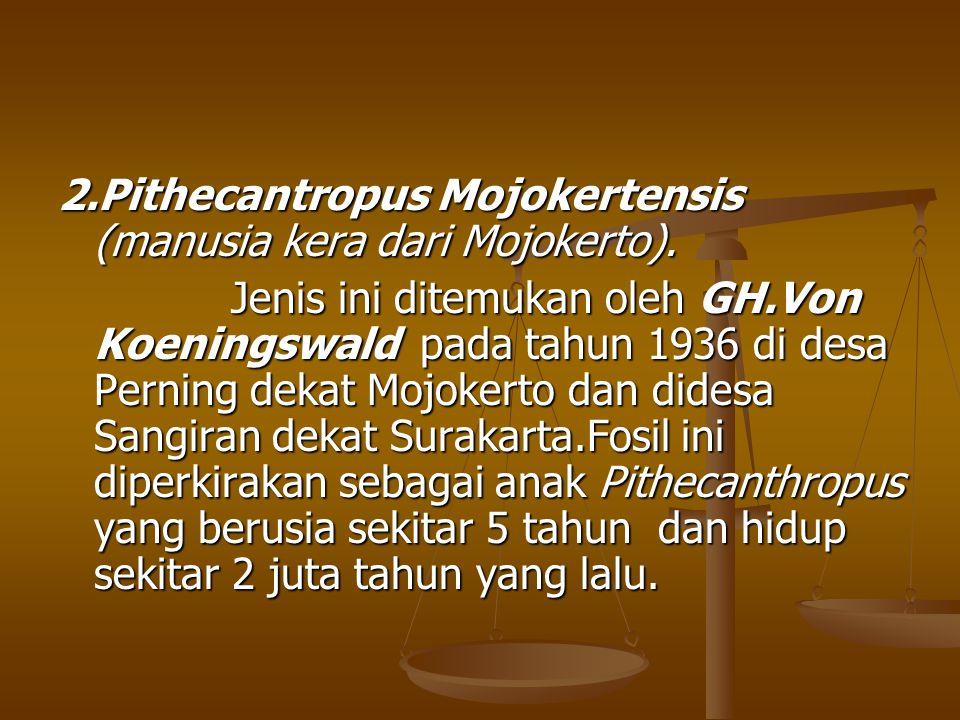 2.Pithecantropus Mojokertensis (manusia kera dari Mojokerto). Jenis ini ditemukan oleh GH.Von Koeningswald pada tahun 1936 di desa Perning dekat Mojok