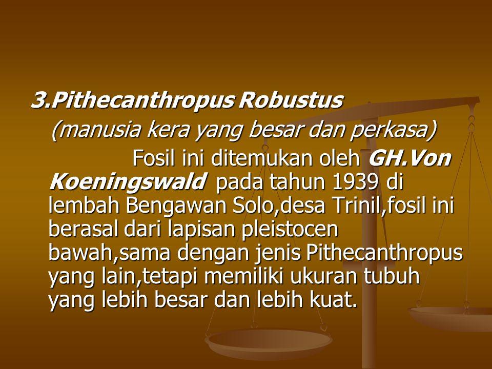 3.Pithecanthropus Robustus (manusia kera yang besar dan perkasa) (manusia kera yang besar dan perkasa) Fosil ini ditemukan oleh GH.Von Koeningswald pa