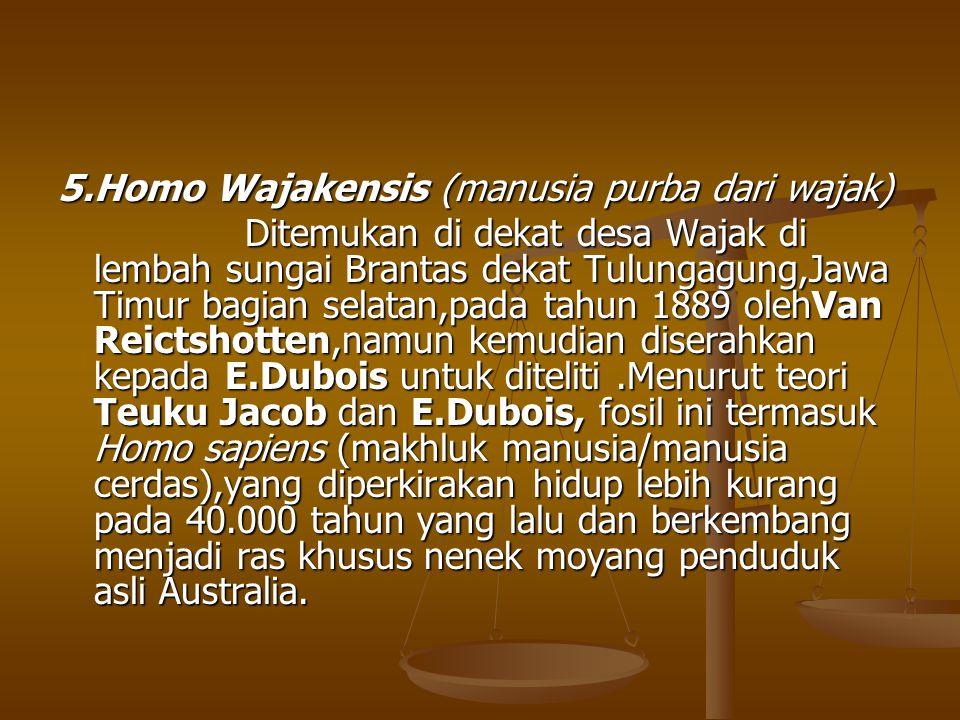 5.Homo Wajakensis (manusia purba dari wajak) Ditemukan di dekat desa Wajak di lembah sungai Brantas dekat Tulungagung,Jawa Timur bagian selatan,pada t