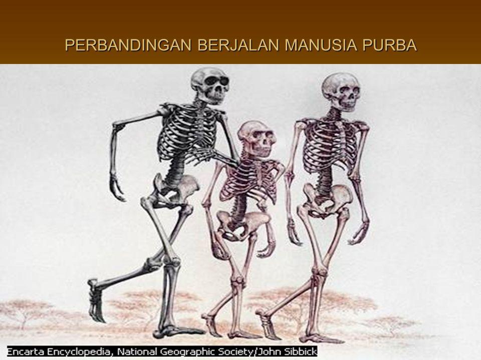 PERBANDINGAN BERJALAN MANUSIA PURBA