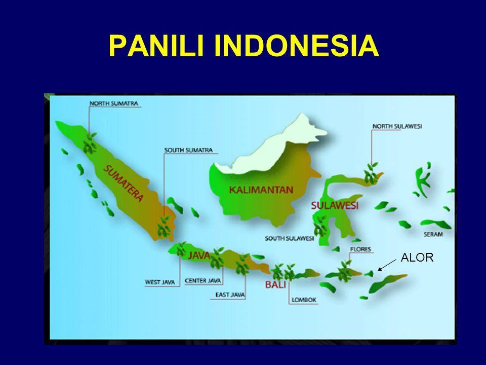 PANILI INDONESIA ALOR