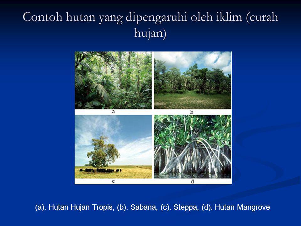 Contoh hutan yang dipengaruhi oleh iklim (curah hujan) (a). Hutan Hujan Tropis, (b). Sabana, (c). Steppa, (d). Hutan Mangrove
