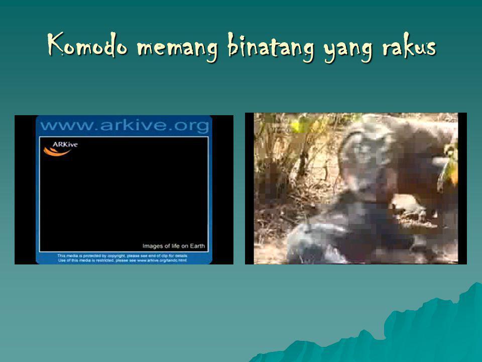 Komodo memang binatang yang rakus