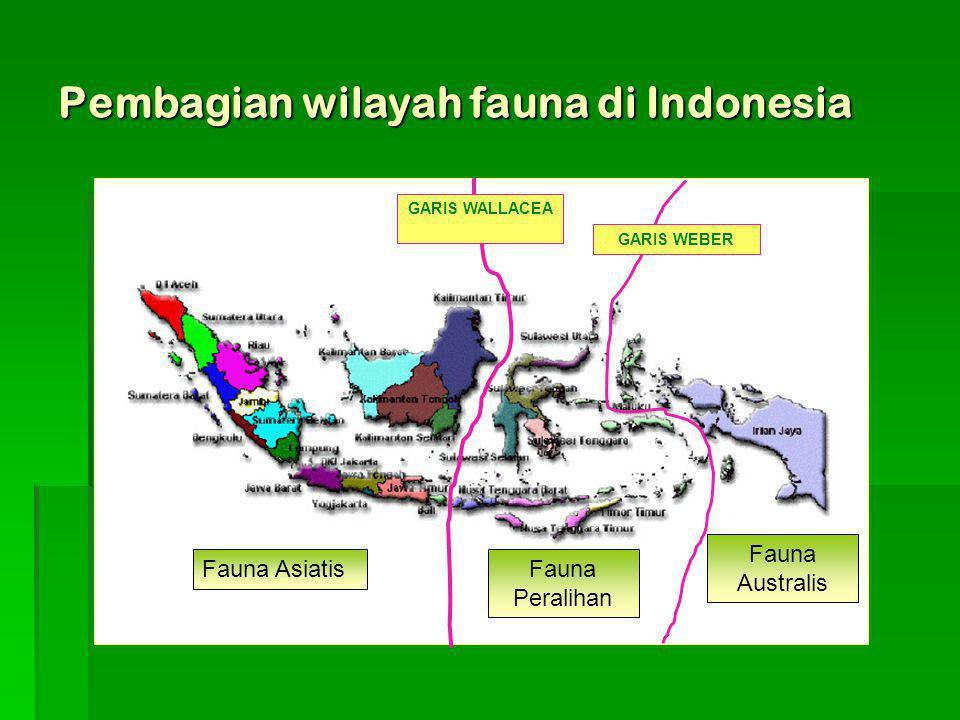 Pembagian wilayah fauna di Indonesia GARIS WALLACEA GARIS WEBER Fauna AsiatisFauna Peralihan Fauna Australis