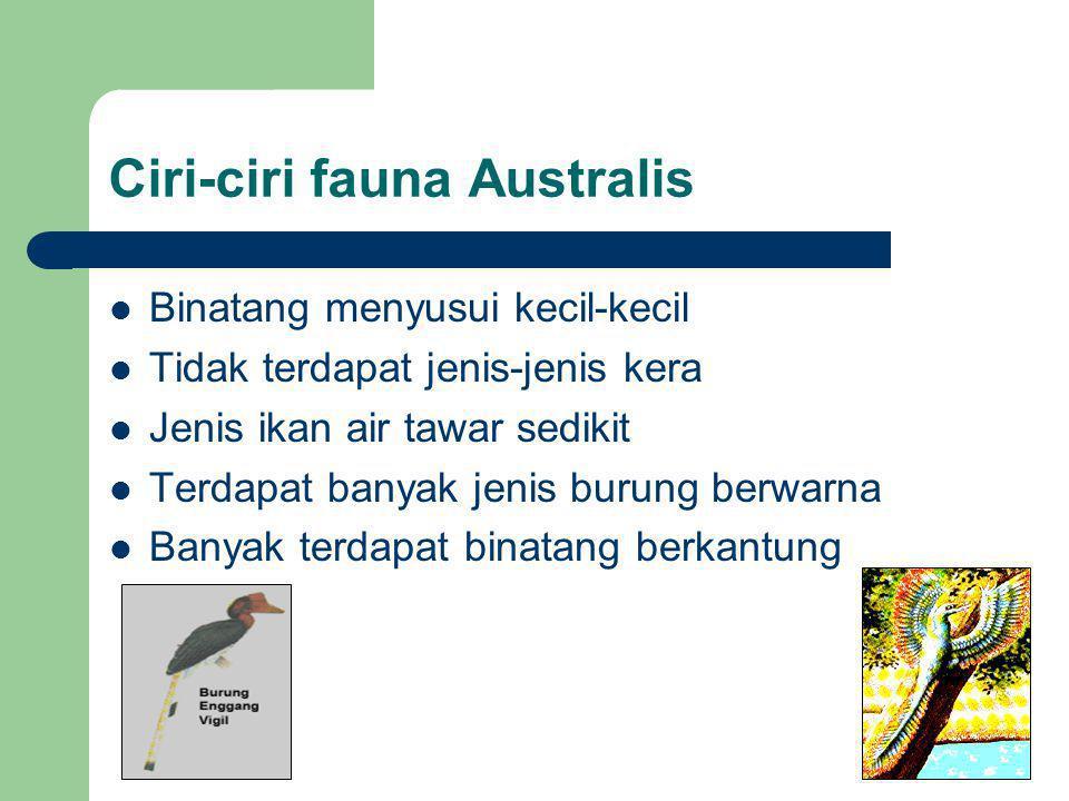 Ciri-ciri fauna Australis Binatang menyusui kecil-kecil Tidak terdapat jenis-jenis kera Jenis ikan air tawar sedikit Terdapat banyak jenis burung berw