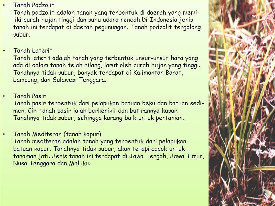 Tanah Podzolit Tanah podzolit adalah tanah yang terbentuk di daerah yang memi- liki curah hujan tinggi dan suhu udara rendah.Di Indonesia jenis tanah ini terdapat di daerah pegunungan.