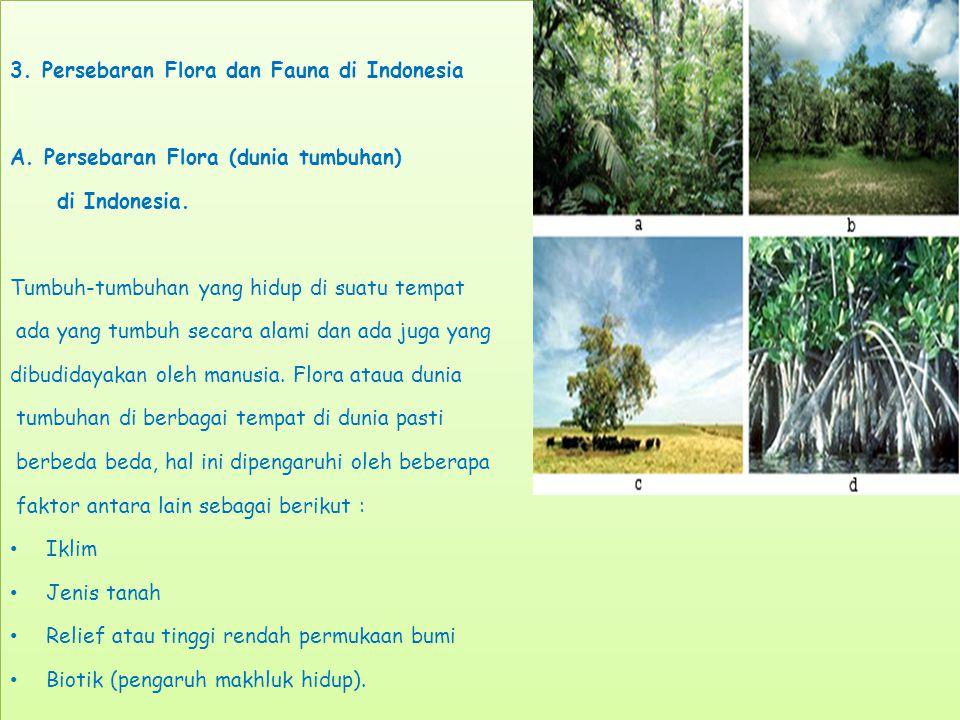 3.Persebaran Flora dan Fauna di Indonesia A. Persebaran Flora (dunia tumbuhan) di Indonesia.