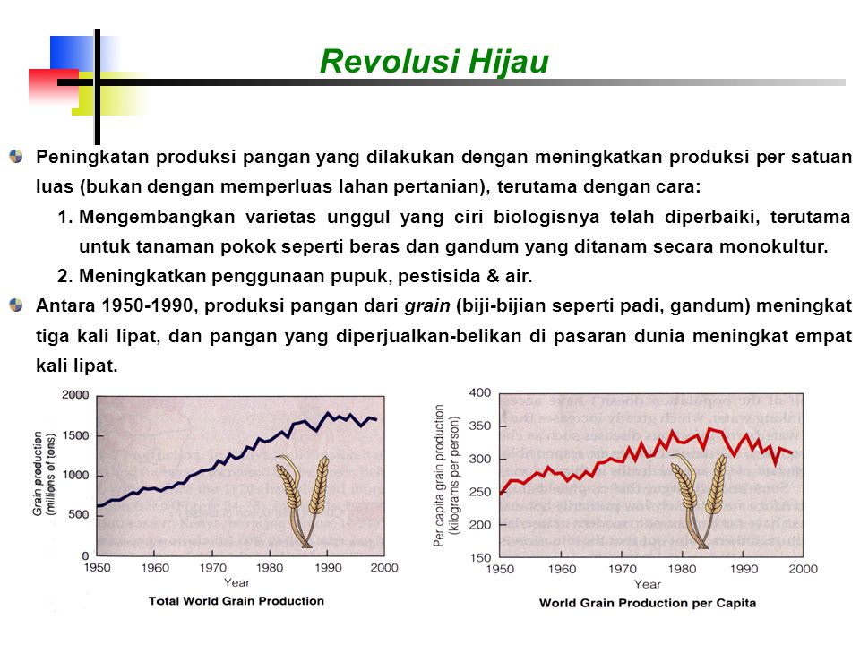 Peningkatan produksi pangan yang dilakukan dengan meningkatkan produksi per satuan luas (bukan dengan memperluas lahan pertanian), terutama dengan cara: 1.Mengembangkan varietas unggul yang ciri biologisnya telah diperbaiki, terutama untuk tanaman pokok seperti beras dan gandum yang ditanam secara monokultur.