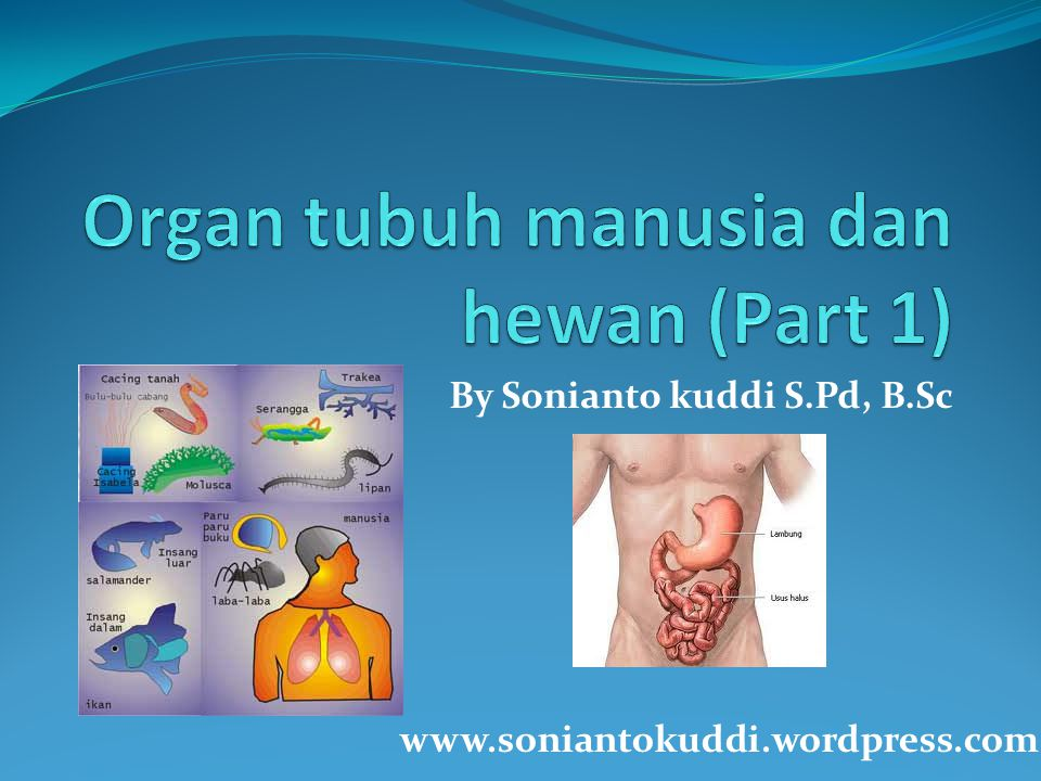 By Sonianto kuddi S.Pd, B.Sc www.soniantokuddi.wordpress.com