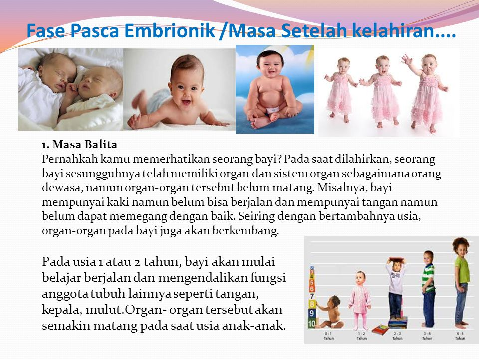 Fase Pasca Embrionik /Masa Setelah kelahiran.... 1. Masa Balita Pernahkah kamu memerhatikan seorang bayi? Pada saat dilahirkan, seorang bayi sesungguh