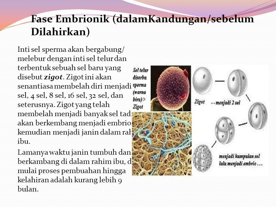 Inti sel sperma akan bergabung/ melebur dengan inti sel telur dan terbentuk sebuah sel baru yang disebut zigot. Zigot ini akan senantiasa membelah dir