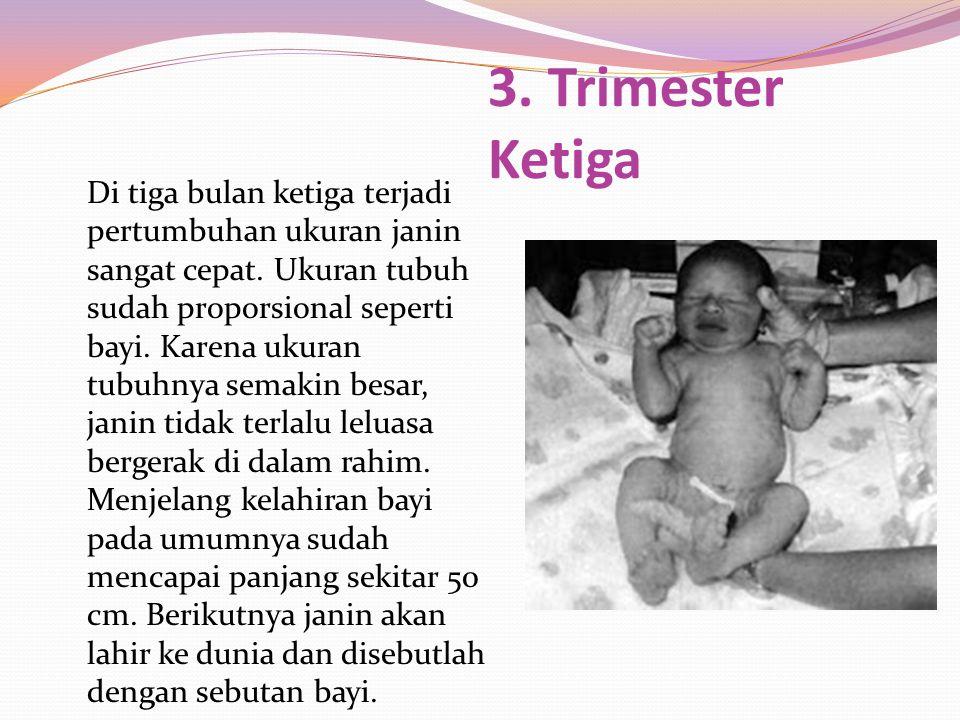 Di tiga bulan ketiga terjadi pertumbuhan ukuran janin sangat cepat. Ukuran tubuh sudah proporsional seperti bayi. Karena ukuran tubuhnya semakin besar