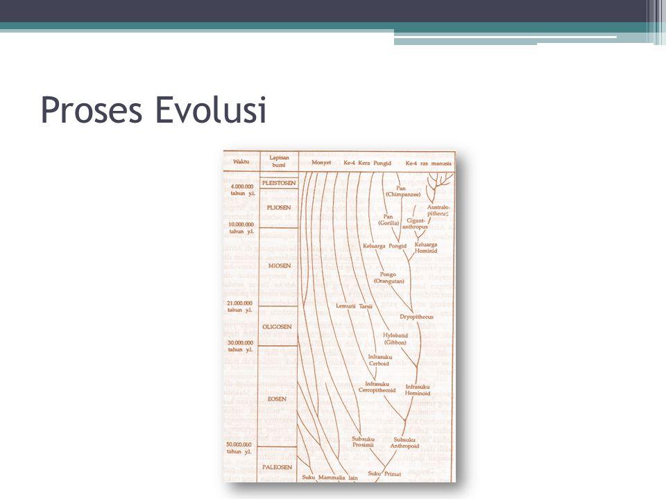 Proses Evolusi