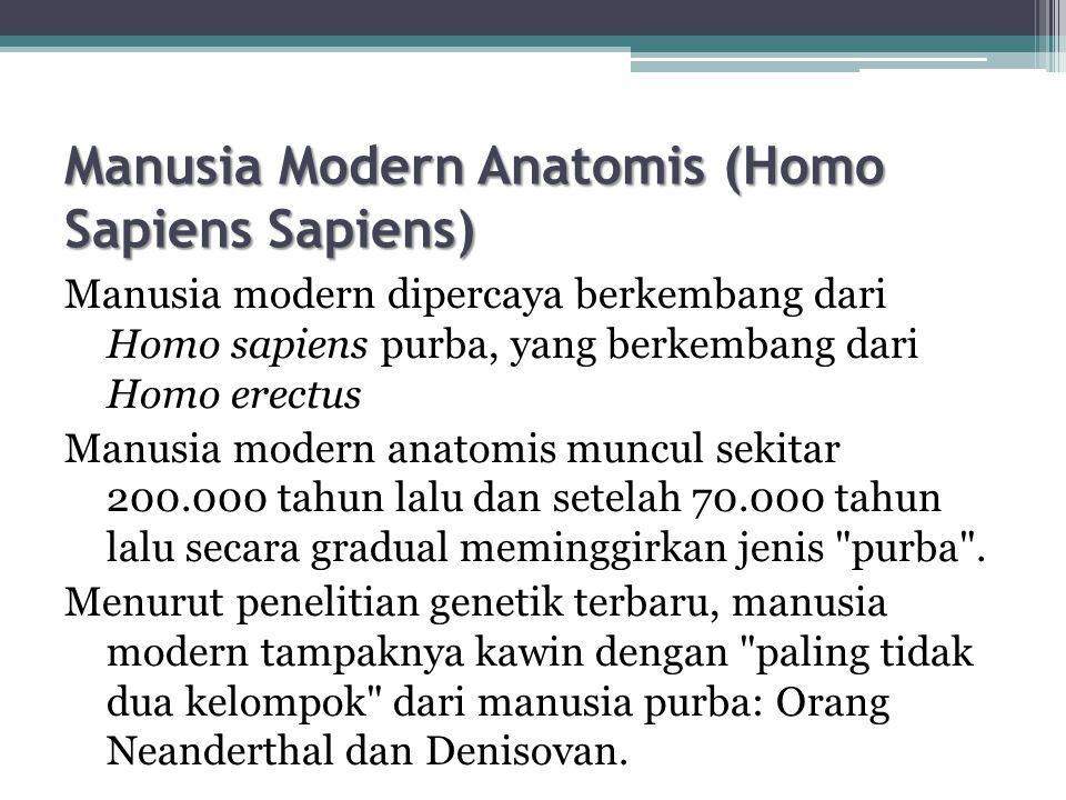 Manusia Modern Anatomis (Homo Sapiens Sapiens) Manusia modern dipercaya berkembang dari Homo sapiens purba, yang berkembang dari Homo erectus Manusia modern anatomis muncul sekitar 200.000 tahun lalu dan setelah 70.000 tahun lalu secara gradual meminggirkan jenis purba .