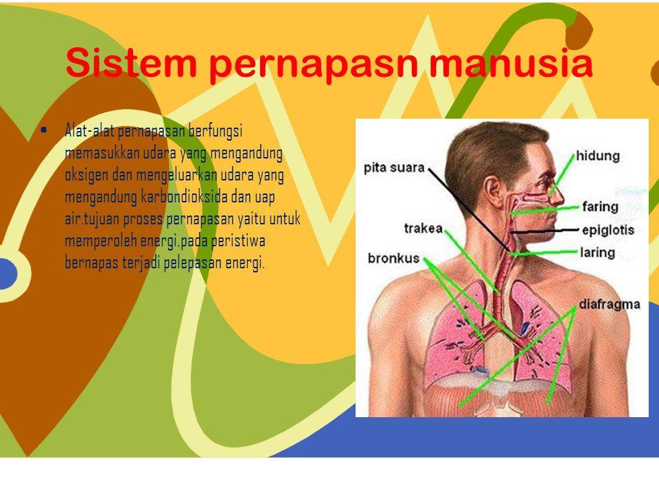 Sistem pernapasan manusia terdiri dari:  Rongga hidung Rongga hidung  FaringFaring  Laring Laring  Trakea Trakea  Bronkus dan bronkiolusBronkus dan bronkiolus  Paru-paru Paru-paru