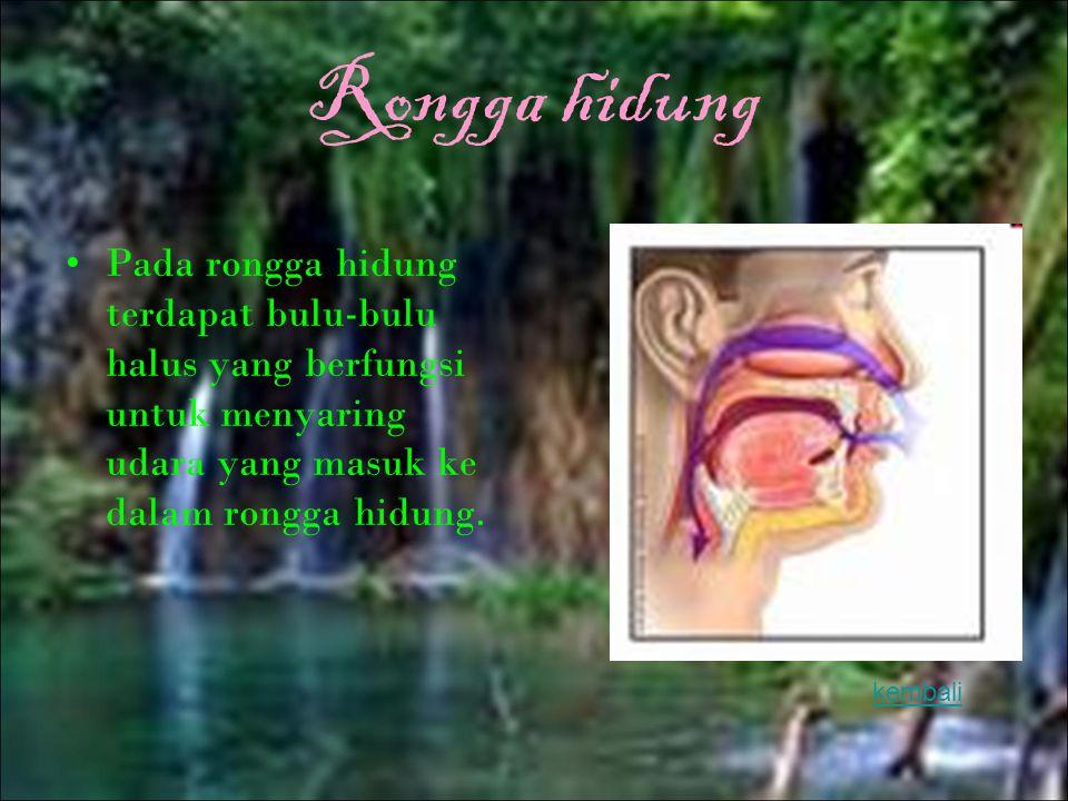 faring Faring (tekak) merupakan persimpangan antara kerongkongan dan tenggorokan. kembali