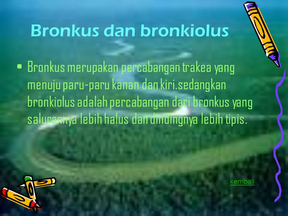 Bronkus dan bronkiolus Bronkus merupakan percabangan trakea yang menuju paru-paru kanan dan kiri.sedangkan bronkiolus adalah percabangan dari bronkus