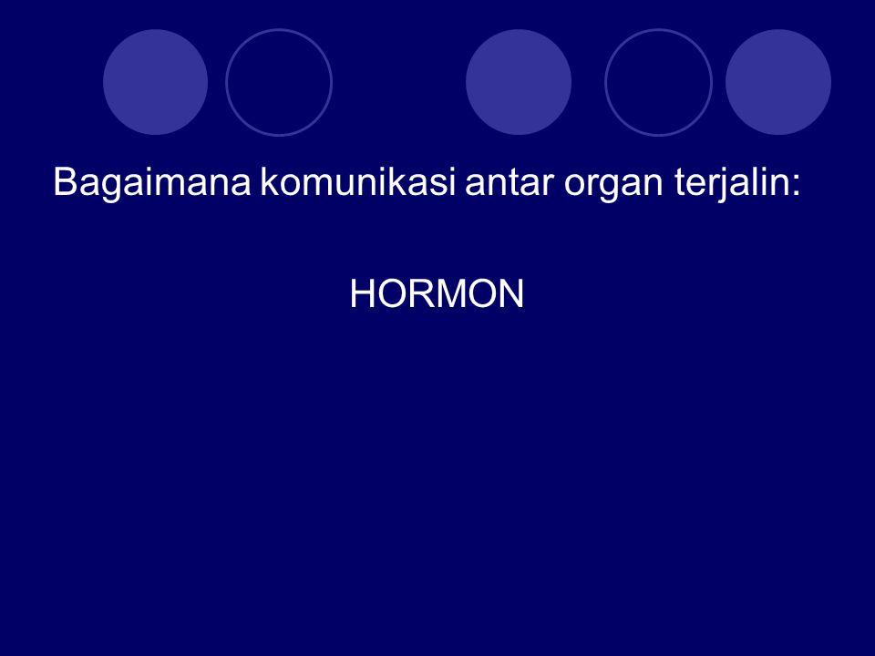 Bagaimana komunikasi antar organ terjalin: HORMON