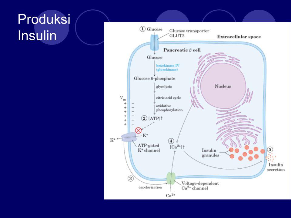 Produksi Insulin