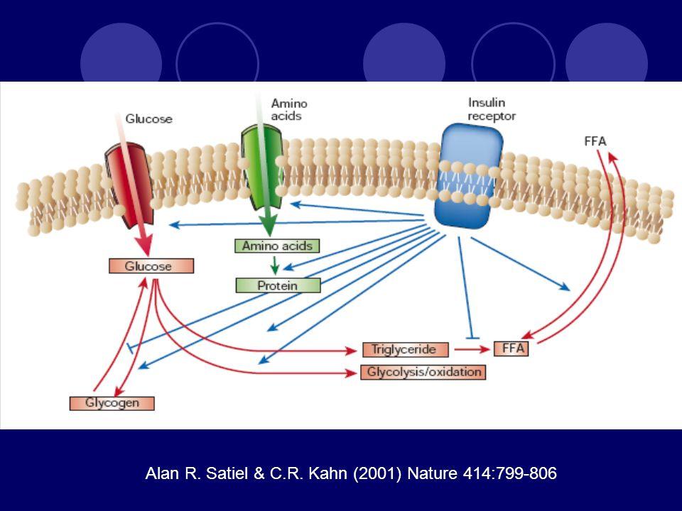 Alan R. Satiel & C.R. Kahn (2001) Nature 414:799-806