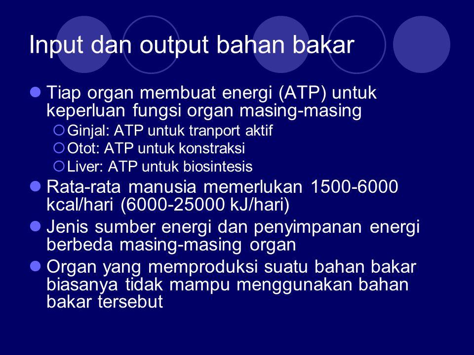 Input dan output bahan bakar Tiap organ membuat energi (ATP) untuk keperluan fungsi organ masing-masing  Ginjal: ATP untuk tranport aktif  Otot: ATP