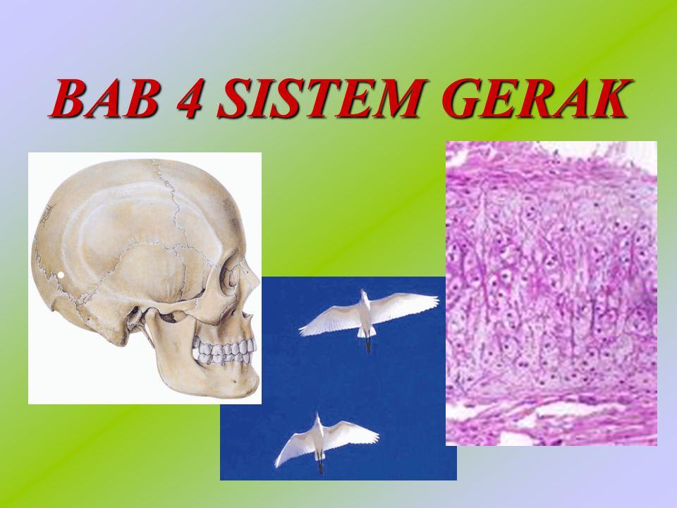 Pokok Bahasan Sistem Gerak pada Manusia Sistem Gerak pada Manusia Sistem Gerak pada Hewan Sistem Gerak pada Hewan