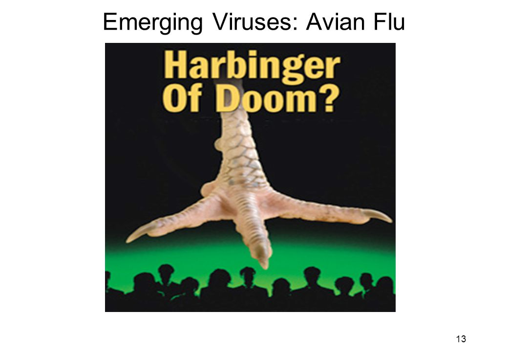 13 Emerging Viruses: Avian Flu