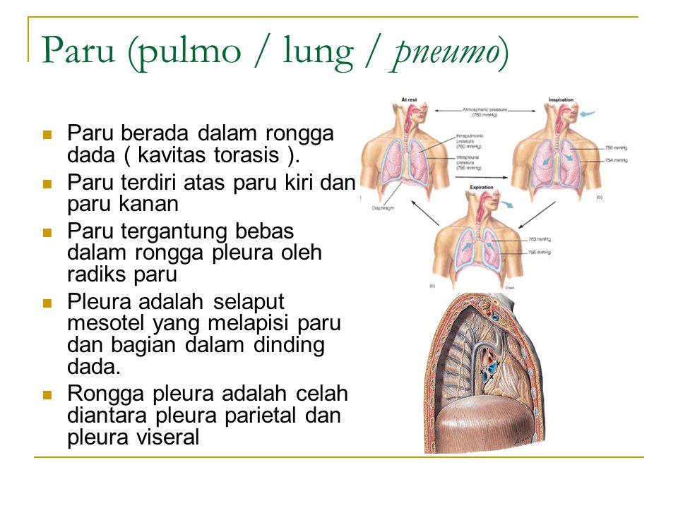 Paru (pulmo / lung / pneumo) Paru berada dalam rongga dada ( kavitas torasis ).