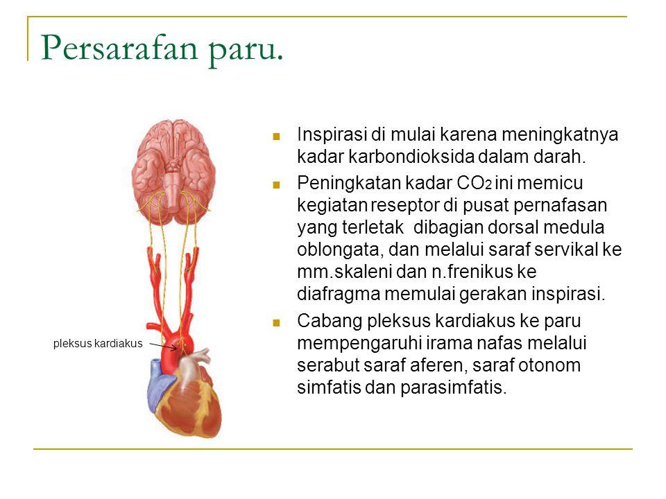 Persarafan paru.Inspirasi di mulai karena meningkatnya kadar karbondioksida dalam darah.