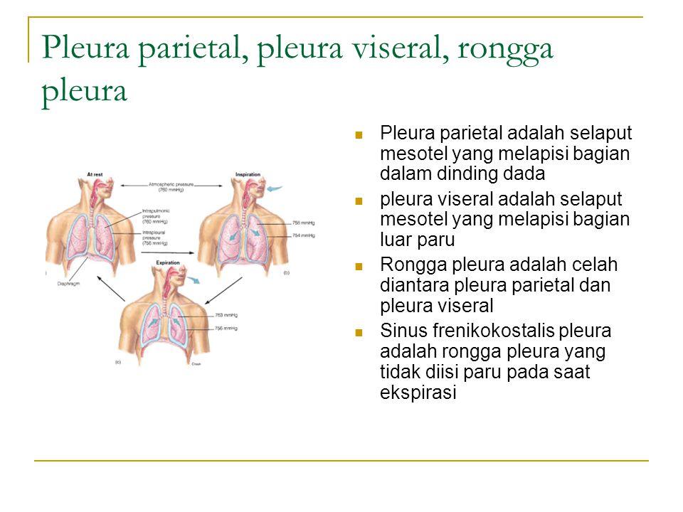 Pleura parietal, pleura viseral, rongga pleura Pleura parietal adalah selaput mesotel yang melapisi bagian dalam dinding dada pleura viseral adalah selaput mesotel yang melapisi bagian luar paru Rongga pleura adalah celah diantara pleura parietal dan pleura viseral Sinus frenikokostalis pleura adalah rongga pleura yang tidak diisi paru pada saat ekspirasi