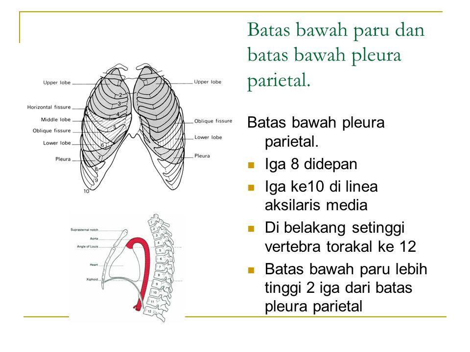 Batas bawah paru dan batas bawah pleura parietal.Batas bawah pleura parietal.