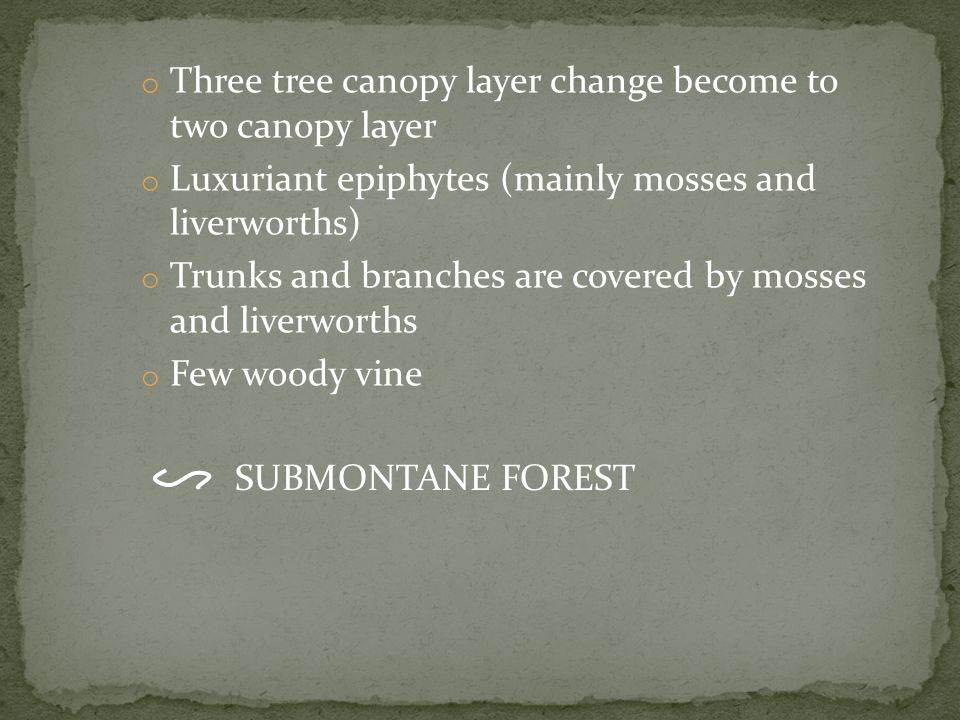 o Three tree canopy layer change become to two canopy layer o Luxuriant epiphytes (mainly mosses and liverworths) o Trunks and branches are covered by mosses and liverworths o Few woody vine SUBMONTANE FOREST