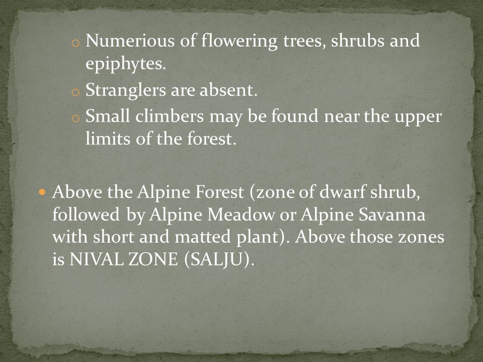 o Numerious of flowering trees, shrubs and epiphytes.