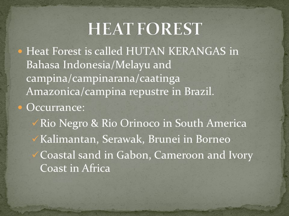 Heat Forest is called HUTAN KERANGAS in Bahasa Indonesia/Melayu and campina/campinarana/caatinga Amazonica/campina repustre in Brazil. Occurrance: Rio