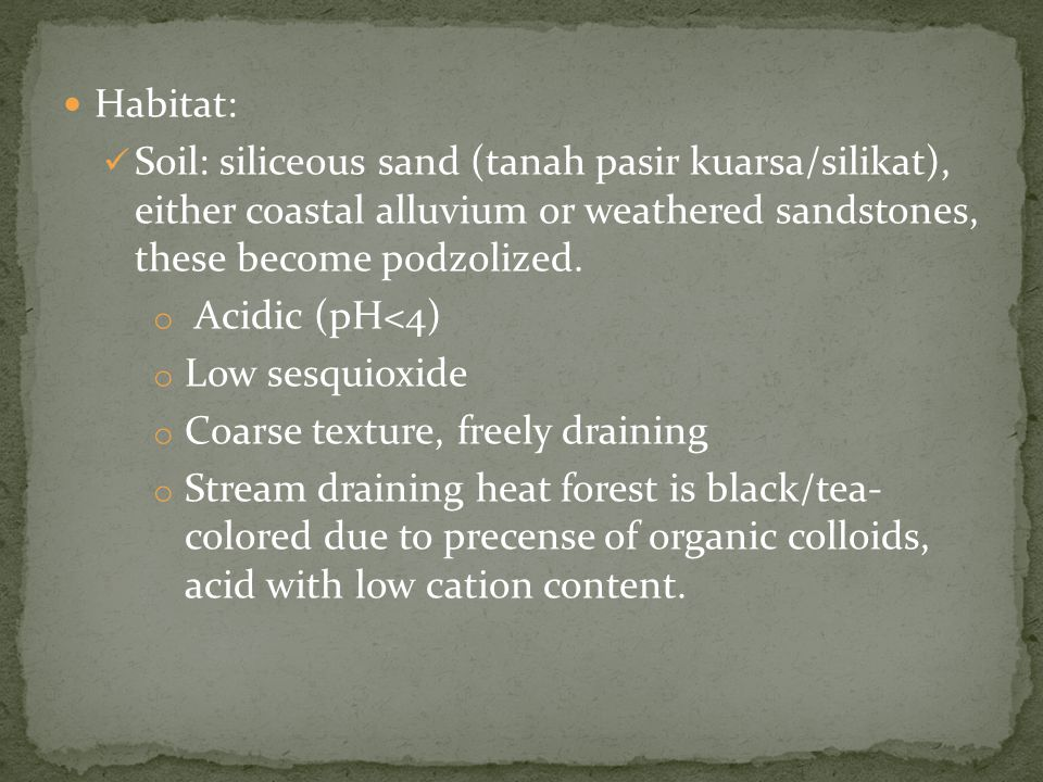 Habitat: Soil: siliceous sand (tanah pasir kuarsa/silikat), either coastal alluvium or weathered sandstones, these become podzolized.