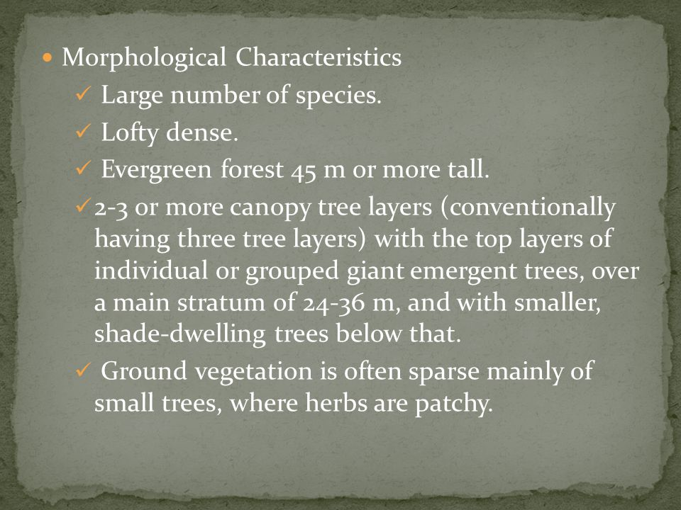 Morphological Characteristics Large number of species.