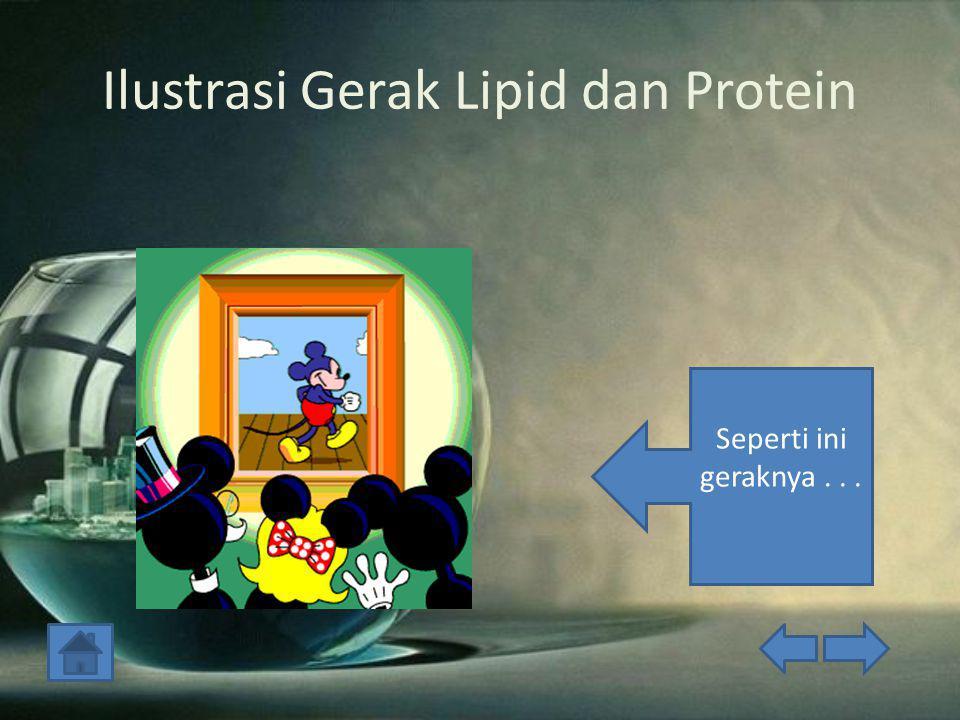 Ilustrasi Gerak Lipid dan Protein Seperti ini geraknya...