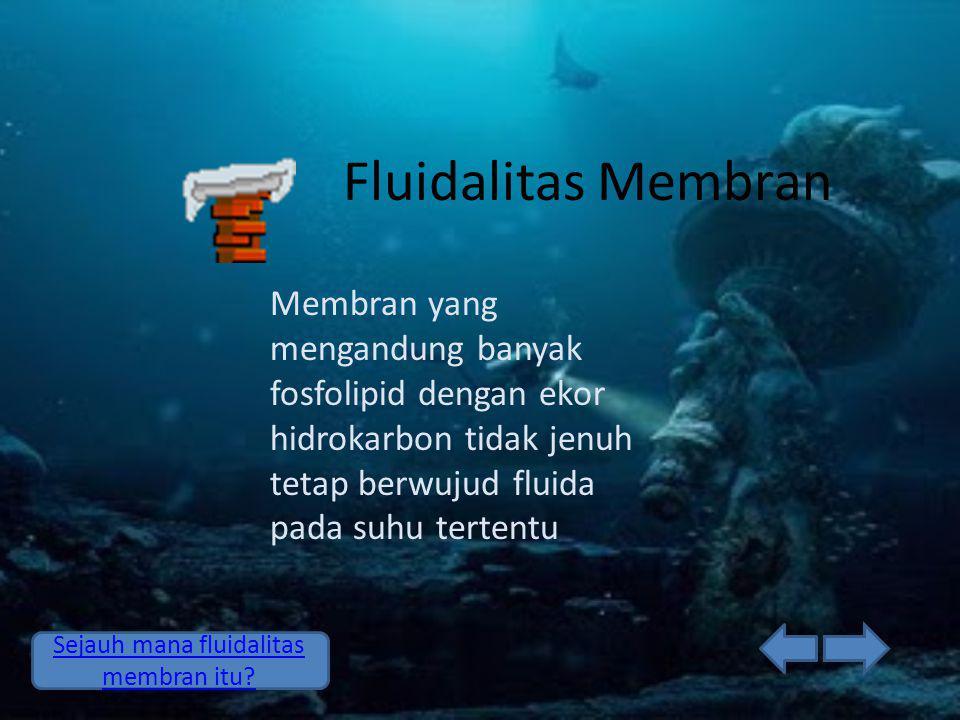 Fluidalitas Membran Membran yang mengandung banyak fosfolipid dengan ekor hidrokarbon tidak jenuh tetap berwujud fluida pada suhu tertentu Sejauh mana