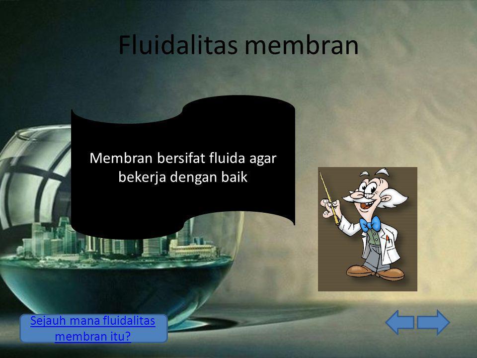 Fluidalitas membran Membran bersifat fluida agar bekerja dengan baik Sejauh mana fluidalitas membran itu?