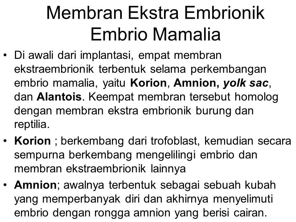 Membran Ekstra Embrionik Embrio Mamalia Di awali dari implantasi, empat membran ekstraembrionik terbentuk selama perkembangan embrio mamalia, yaitu Ko