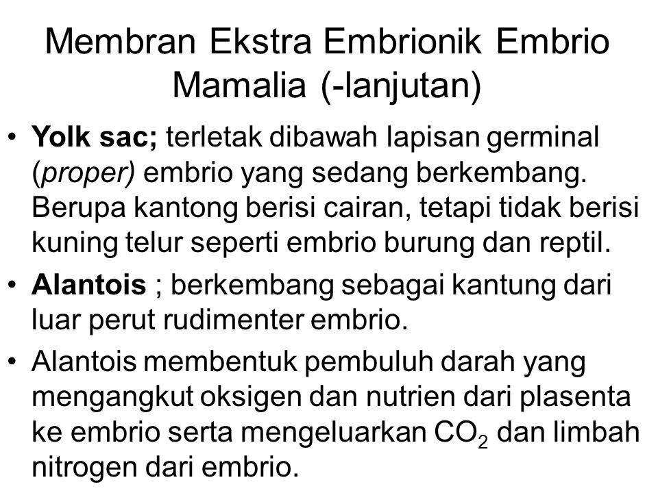 Membran Ekstra Embrionik Embrio Mamalia (-lanjutan) Yolk sac; terletak dibawah lapisan germinal (proper) embrio yang sedang berkembang. Berupa kantong