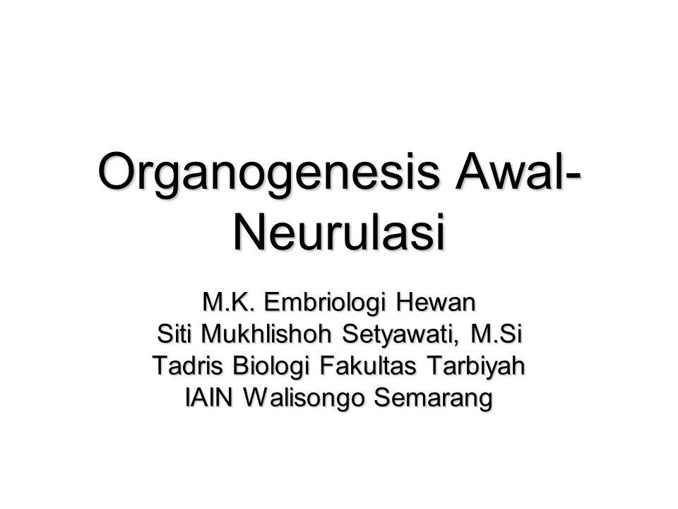 Organogenesis Awal- Neurulasi M.K.