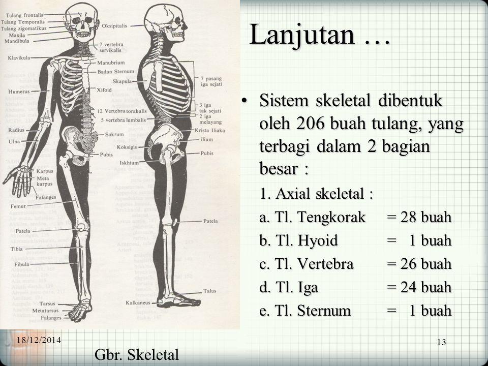 13 Lanjutan … Sistem skeletal dibentuk oleh 206 buah tulang, yang terbagi dalam 2 bagian besar :Sistem skeletal dibentuk oleh 206 buah tulang, yang te